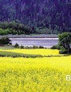西藏参团旅行,拉萨,林芝,拉萨