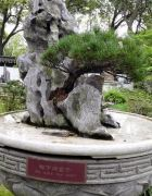 如何使用手机给苏州虎丘风景名胜区木石拍照