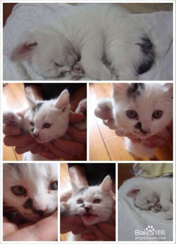 小猫抑郁了怎么办?