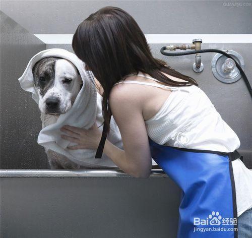 如何给狗狗洗澡,使狗狗美美的,香香的