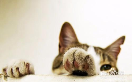 猫咪为什么要吃猫奶粉 猫咪吃羊奶粉吗